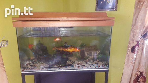 Aquarium with fishes and accessories.-2