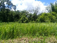 Residential plot/homestead. Reduced Cost