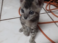 Adorable kitten looking for a home