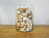 Glass Vase with Sea Shells