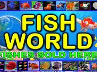 Fishes Wholesale and Retail