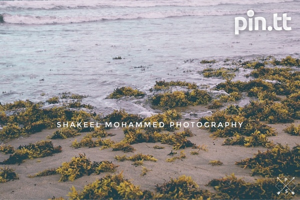 Professional Photographer Services-1