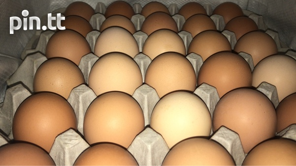 Common Fowl And Layer Eggs