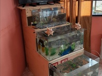 TV AND AQUARIUM STAND