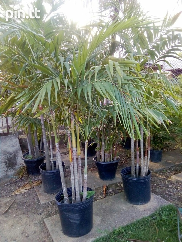 Wide Range of Palms-5