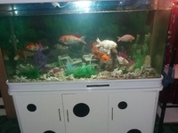 Aquarium with built in cabinet, koi fishes and ornaments