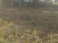 Lalloo Trace , Cunupia- 2 lots