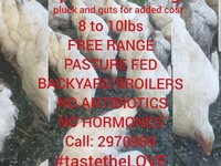 BACKYARD BROILERS