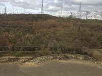 5000 Sq Ft Caroni Residential Land In Reform