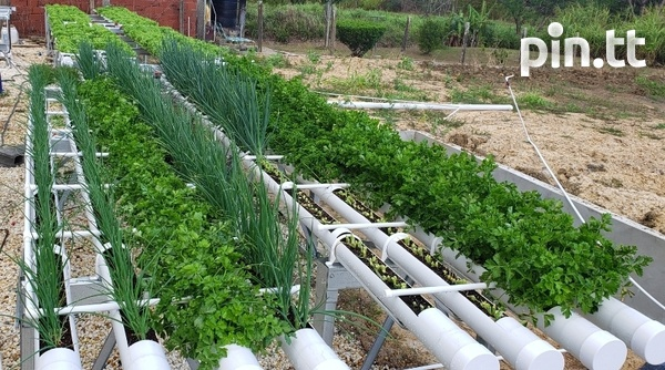 Hydroponic Pipes-1
