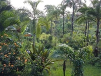 8 acres freehold land, Guaico