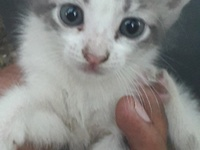 Kittens need home