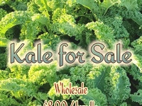 Locally grown Kale