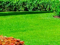 Lawn maintenance, painting and pressure washing services.