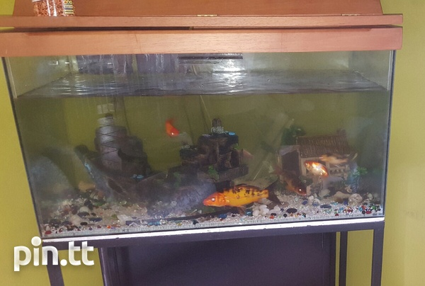 Aquarium with fishes and accessories.-1