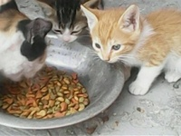 Free Four Month Old Kittens For Adoption