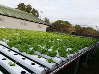 Organically Grown Hydroponics