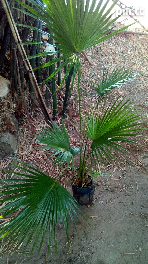 Wide Range of Palms-4