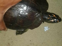 turtles text me for info