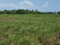 One Lot of Agri Freehold Land, Kelly Village