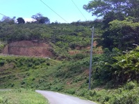 Tobago freehold land 1.5 acre