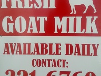 Fresh Goat Milk