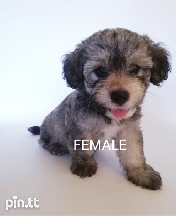 6 Mix breed puppies-6