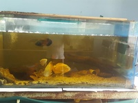 Aquarium and Cichlids