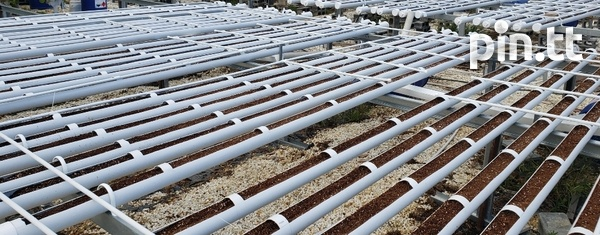 Hydroponic Pipes-3