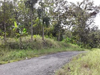 5 acres of land with teak trees