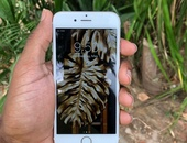 iPhone 6s 16GB - Gold