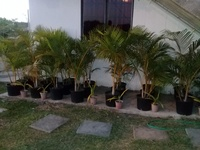 Palms and Tablecloths