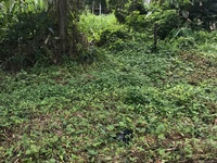 INVESTMENT PLOT, BEJUCAL ROAD, CUNUPIA
