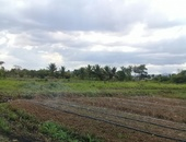 Cunupia 2 acres agricultural land