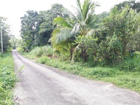 Agriculture Land 10 acres