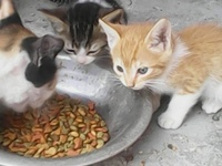Free Four Month Old Kittens