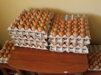 CYS Homested Eggs