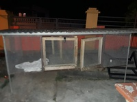 chicken/bird cage