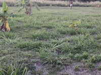 2 Plots Residential land