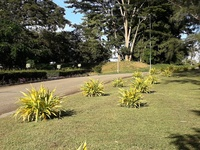 Claxton Bay large residential land.