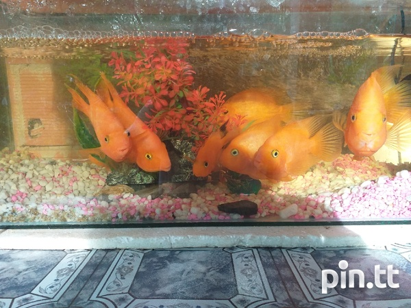 Fishes-1