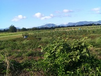 2 acres agricultural...Charlieville-Assaraf Road