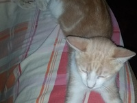 Three Seven Month Old Cats For Adoption
