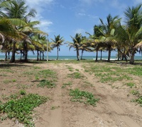 Land For Sale In Trinidad and Tobago Sell, Buy - Free Ads At