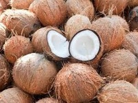Wholesale dried coconuts
