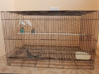Budgies and cage